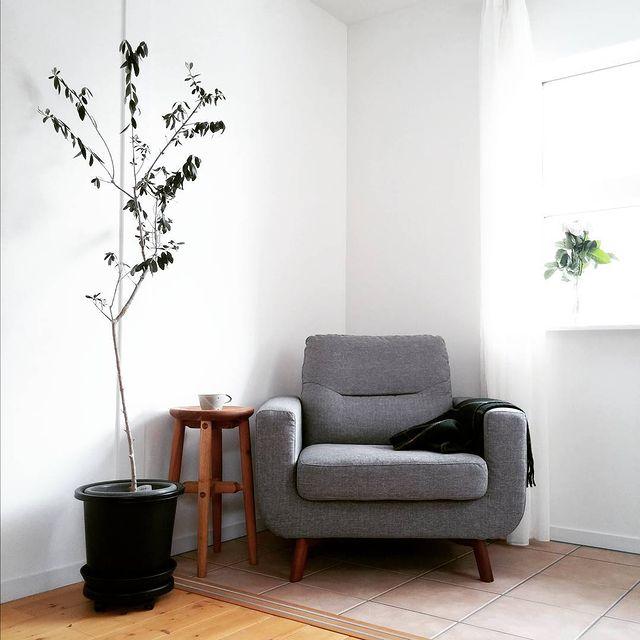 オリーブをソファ横におしゃれに飾る