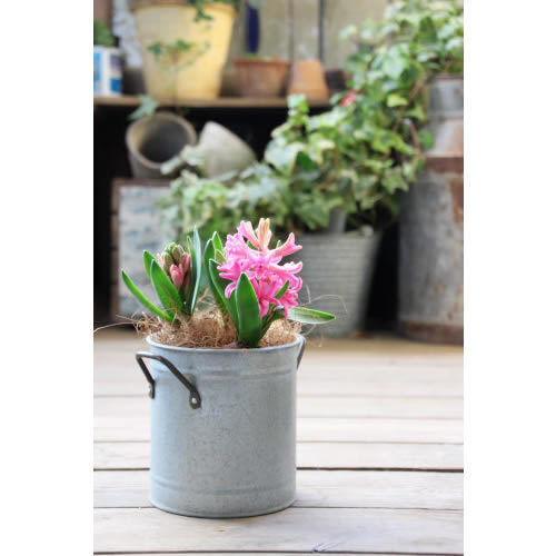 素材の寄せ植えにおすすめな鉢