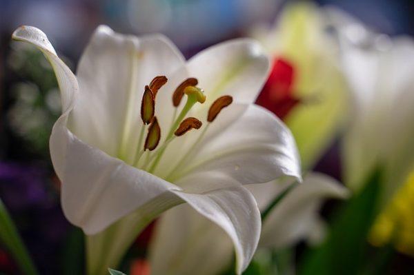 素敵な花言葉《祝福》