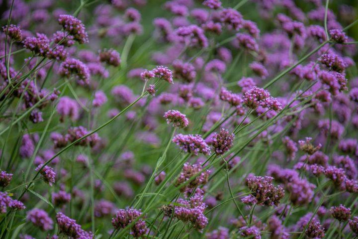 花言葉が平和を意味する花《冬》