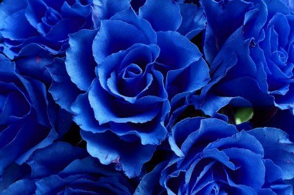 素敵な花言葉《人生・恋愛》