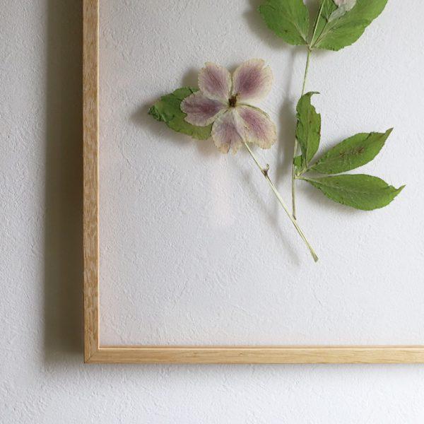 押し花をFRAMEに飾ってみました9