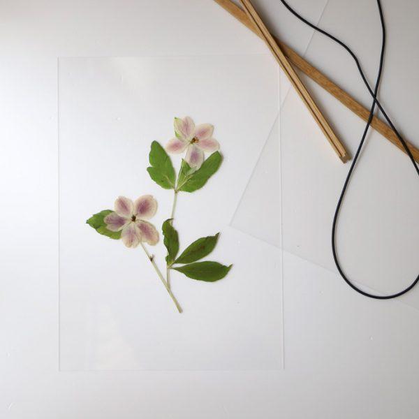 押し花をFRAMEに飾ってみました4