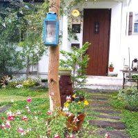 秋の花壇におすすめの植物まとめ。お庭を鮮やかに演出してガーデニングを楽しもう