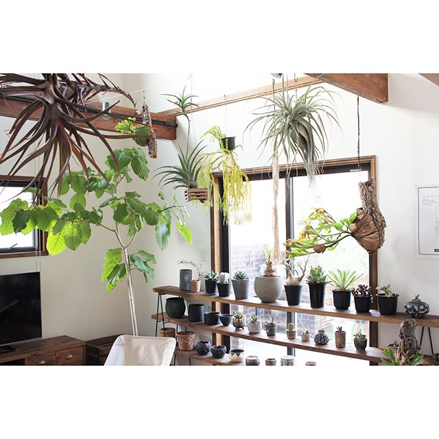 観葉植物でこなれたカフェ風のインテリア