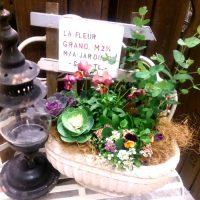 初心者も◎な秋の寄せ植え特集。今の季節に人気の植物で玄関やベランダを素敵に