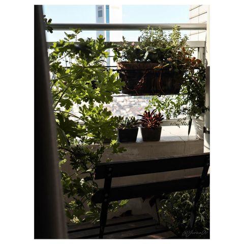 狭くても植物を楽しめるルーフバルコニー