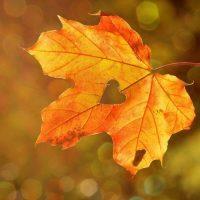 読み返したくなるおすすめの秋の俳句6選。季節の情景が浮かぶ日本の名句特集