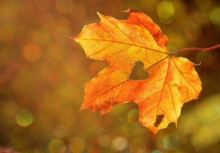 おすすめの秋の俳句《恋愛》
