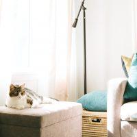 猫用のおしゃれなケージ特集!愛猫が快適に生活できる空間づくりにおすすめの商品