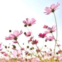 秋の花に込められた花言葉のまとめ。感謝や素敵な意味を持つ植物って?
