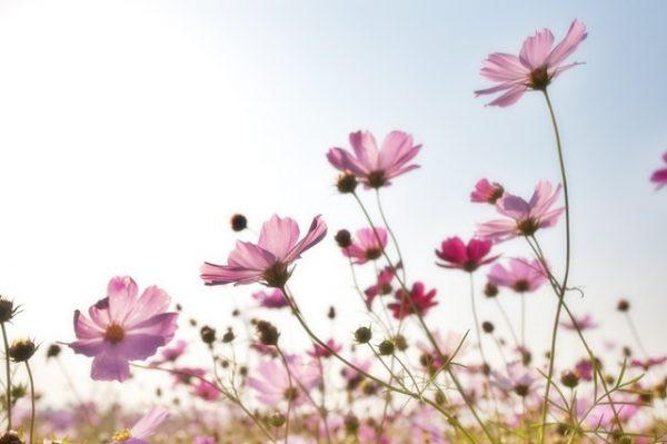 秋の花の花言葉《9月》