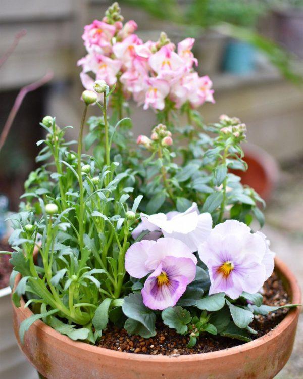 可憐なお花の寄せ植えで作るガーデンスタイル