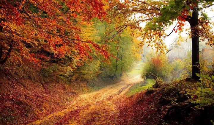 美しい秋の言葉《単語》