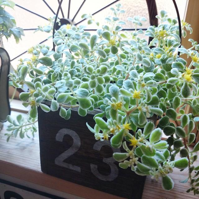 寝室に観葉植物8
