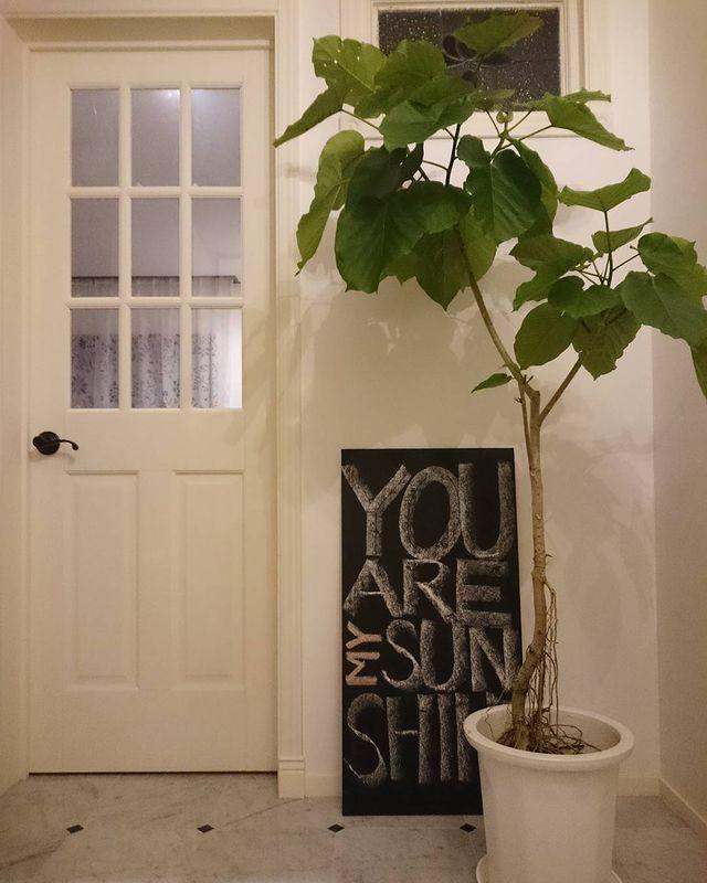 寝室に観葉植物3