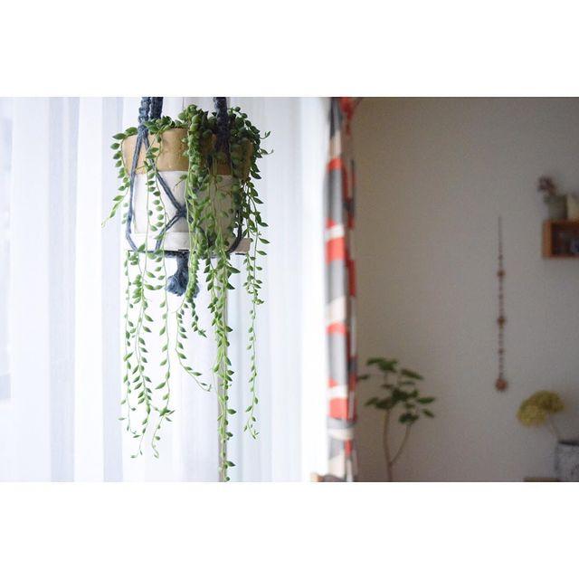 寝室に観葉植物14