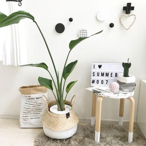 寝室に観葉植物4