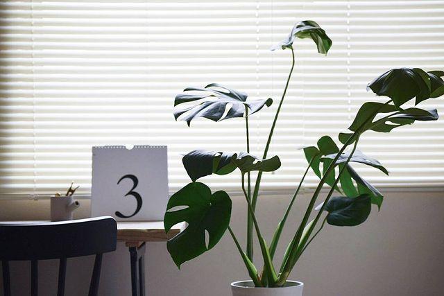 寝室に観葉植物2