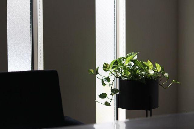 寝室に観葉植物12