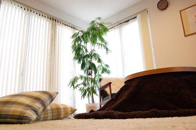 寝室に観葉植物5