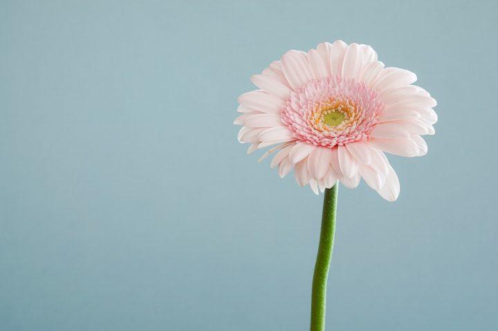 かっこいい花言葉《秋の花》