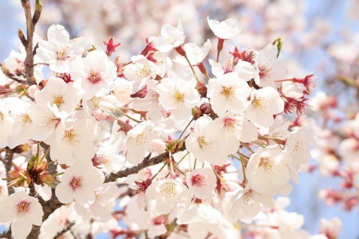 かっこいい花言葉《春の花》
