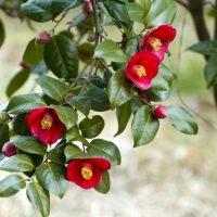 冬の花の花言葉はこんなに綺麗。12月〜2月別にお気に入りが見つかる植物図鑑