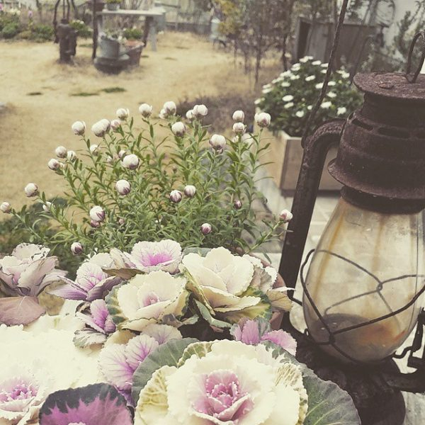 葉と花のおしゃれでシンプルな寄せ植え