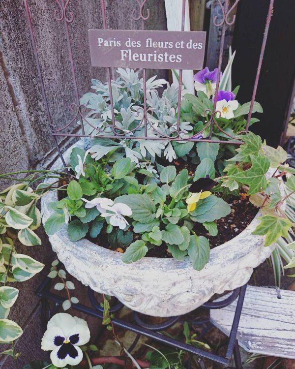 春が楽しみになるシンプルな寄せ植え