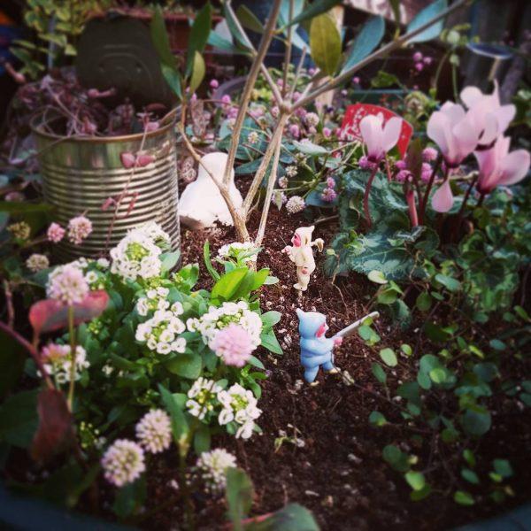 冬の花シクラメンを使った可愛い寄せ植え