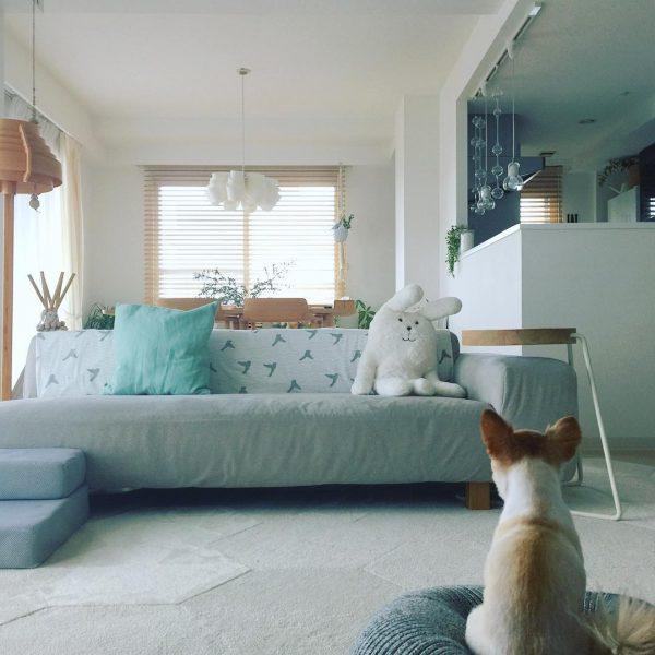 ソファ×犬用クッションのある可愛いリビング