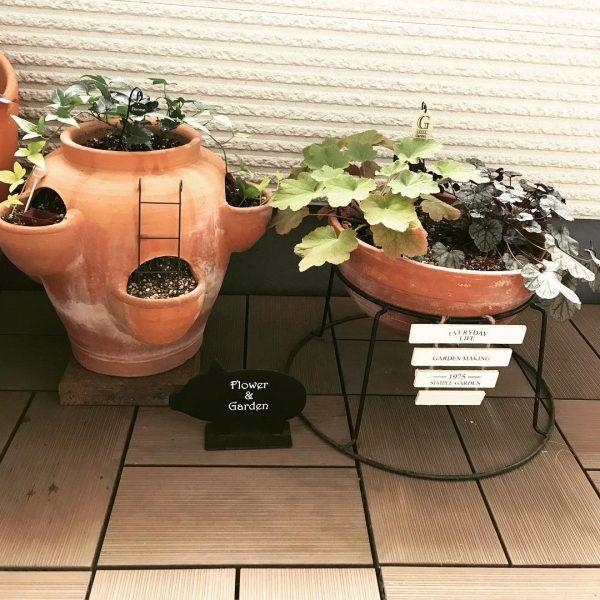 素敵な鉢植えに入れるシックな寄せ植え